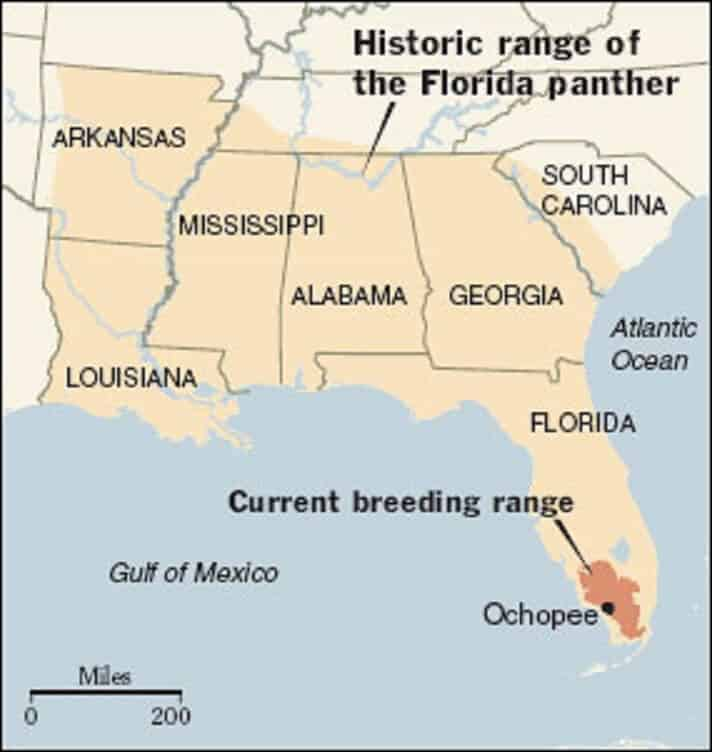Florida Panther Range - Historic and Current