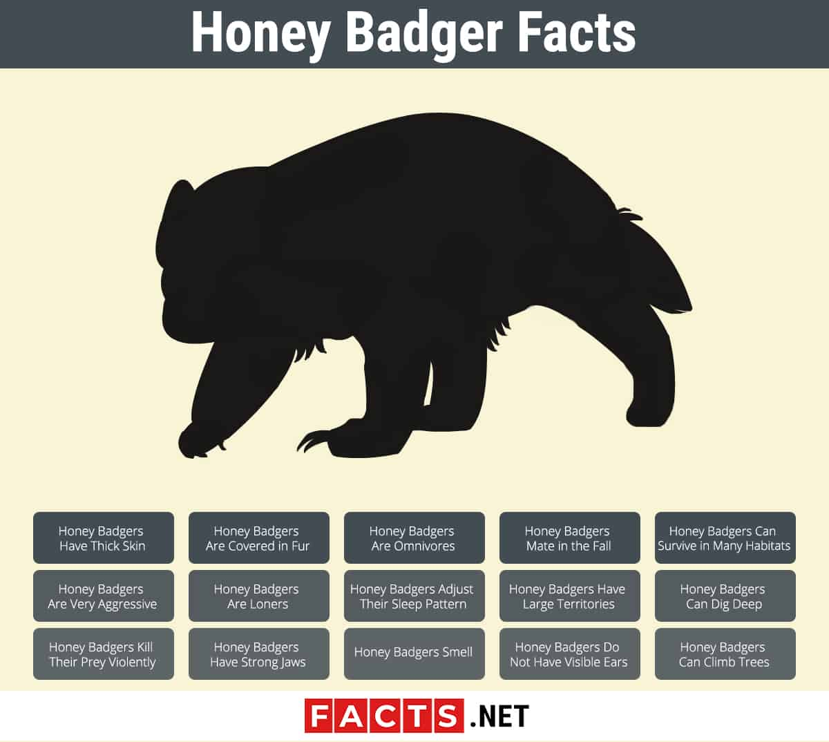Honey Badger Facts Infographics