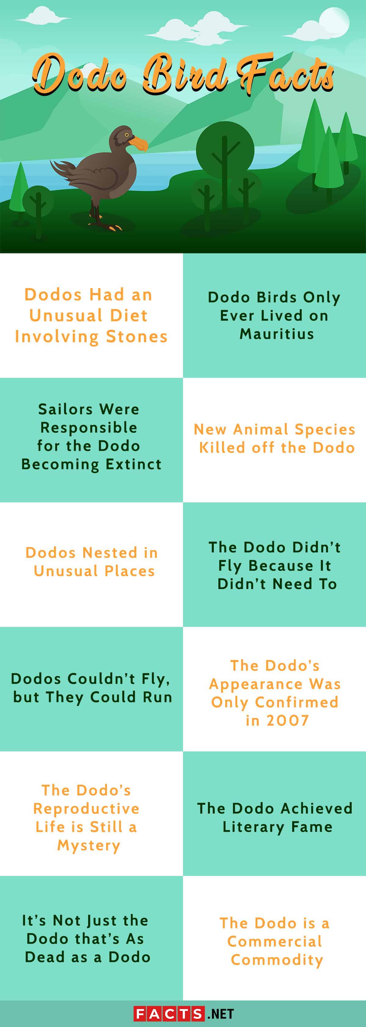 Dodo bird facts Infographics
