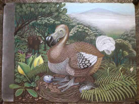 dodos nest