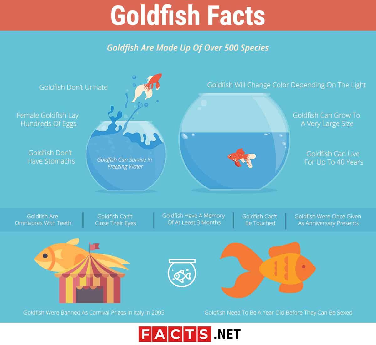 goldfish facts infographics