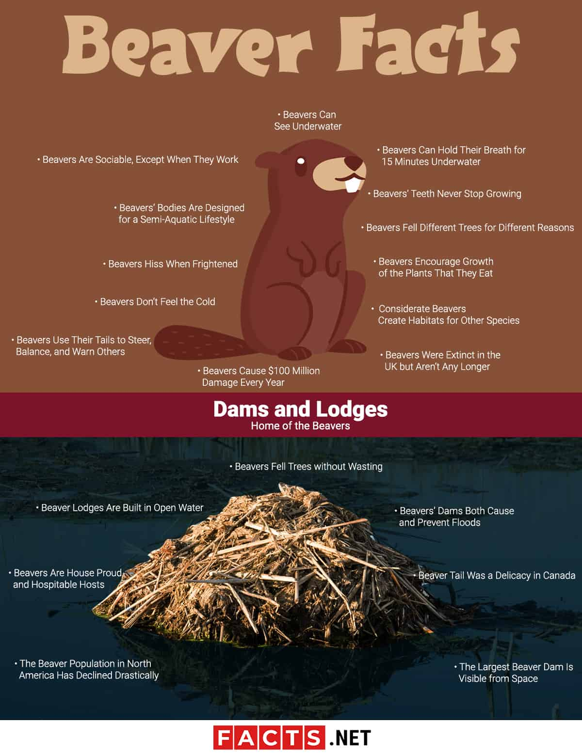 Beaver Facts Infographics