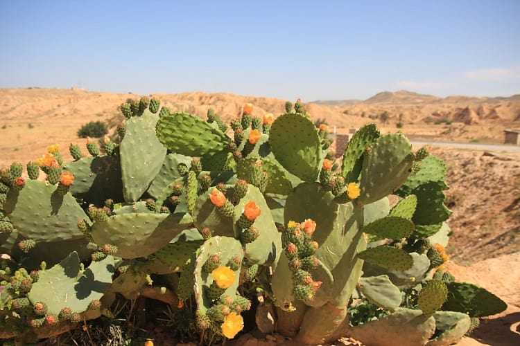desert biome facts 14 facts about animals and plants