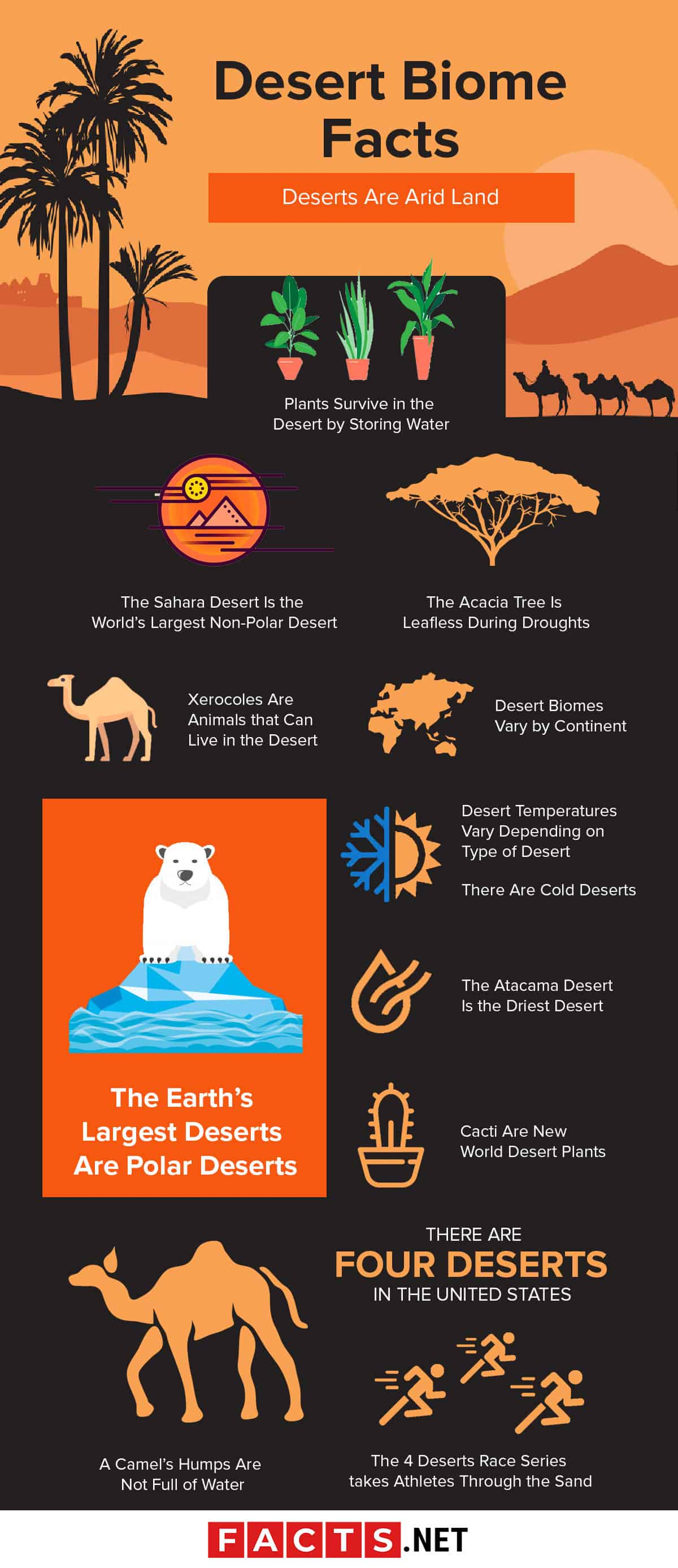 Desert Biome Facts Infographics