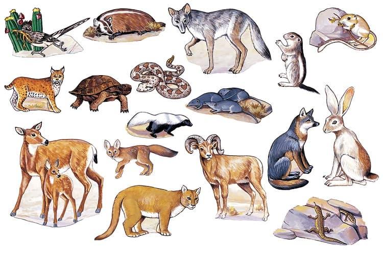 Types of Desert Animals