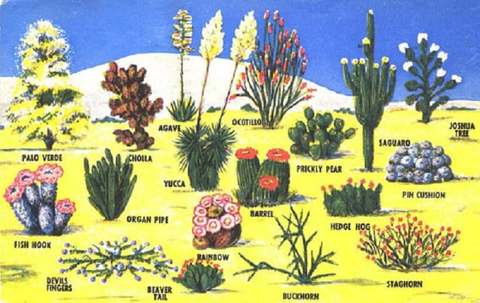 Desert biome plants list