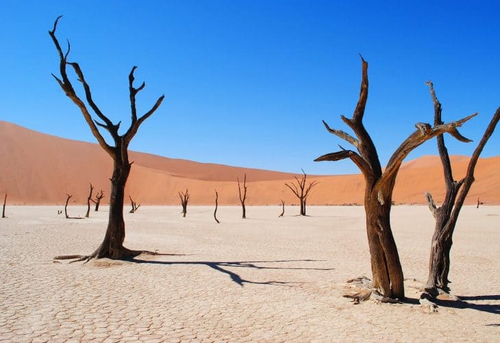 14 Desert Biome Facts - Animals, Plants, Temperature ...