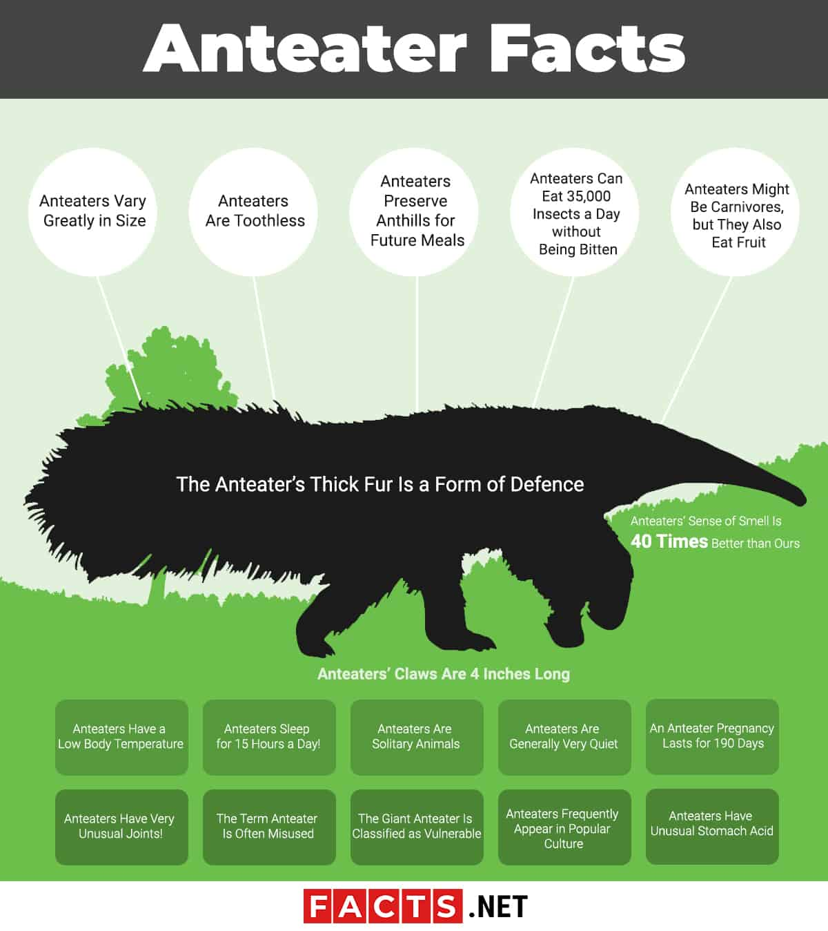 Anteater Facts infographics