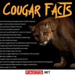 Cougar Facts