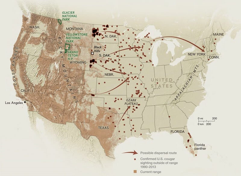 Cougar Population in U.S.