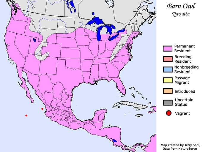 Barn Owl Range Map