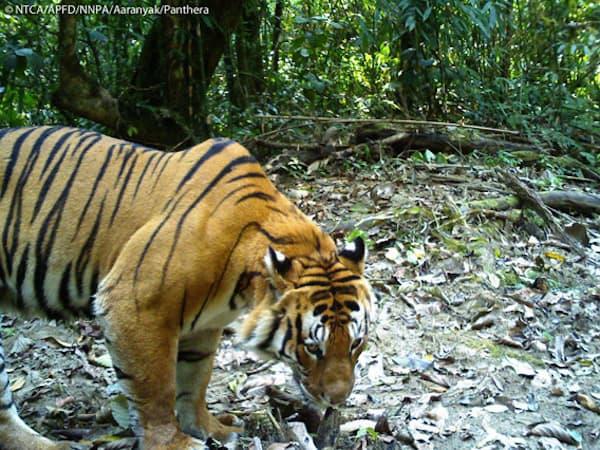 Deforestation Affects Animals