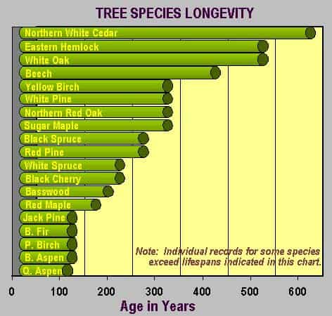 Tree Longevity by Species