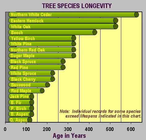 Tree-Longevity-by-Species