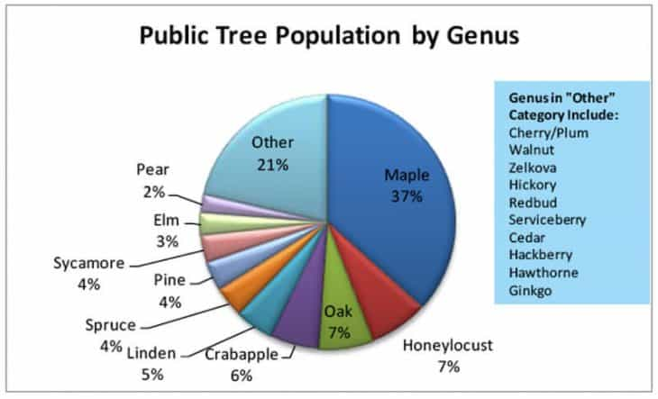 Tree Population by Genus