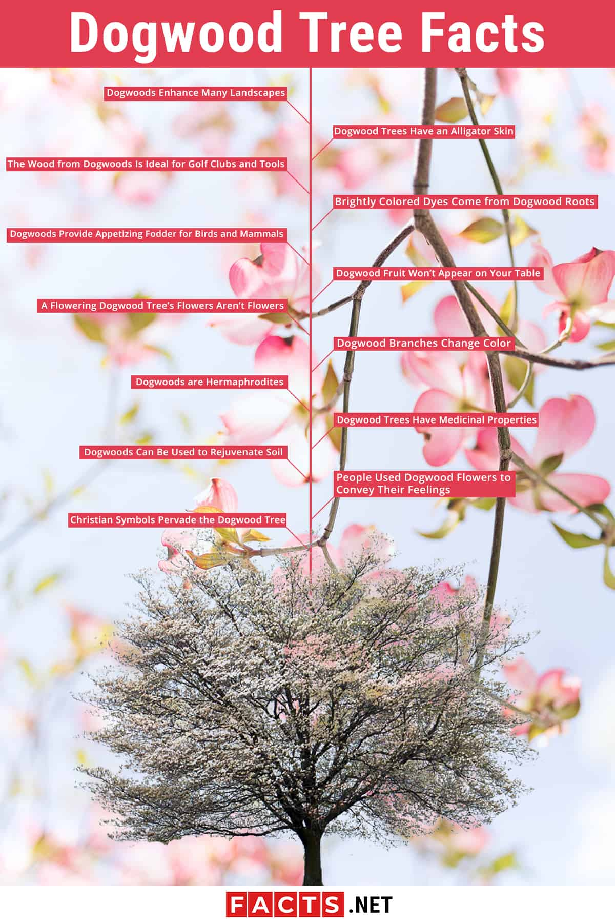 13 Dogwood Trees Facts Origin Symbolism Legends More Facts Net