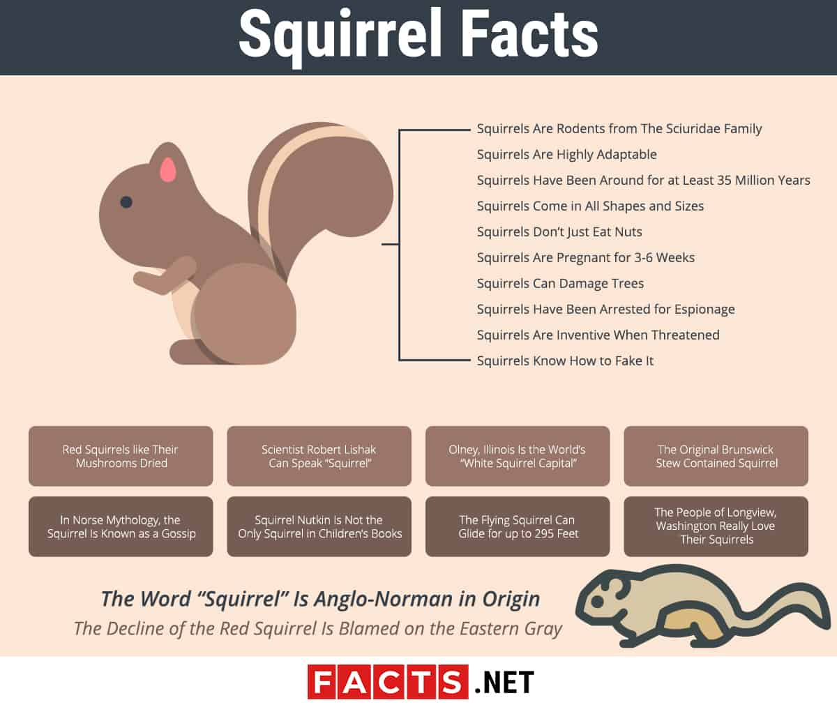 Squirrel Facts Infographics