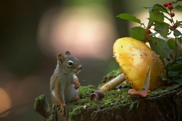 Squirrel Also Eat Fungus