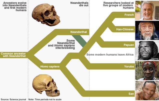 Human Neanderthal Interbreeding