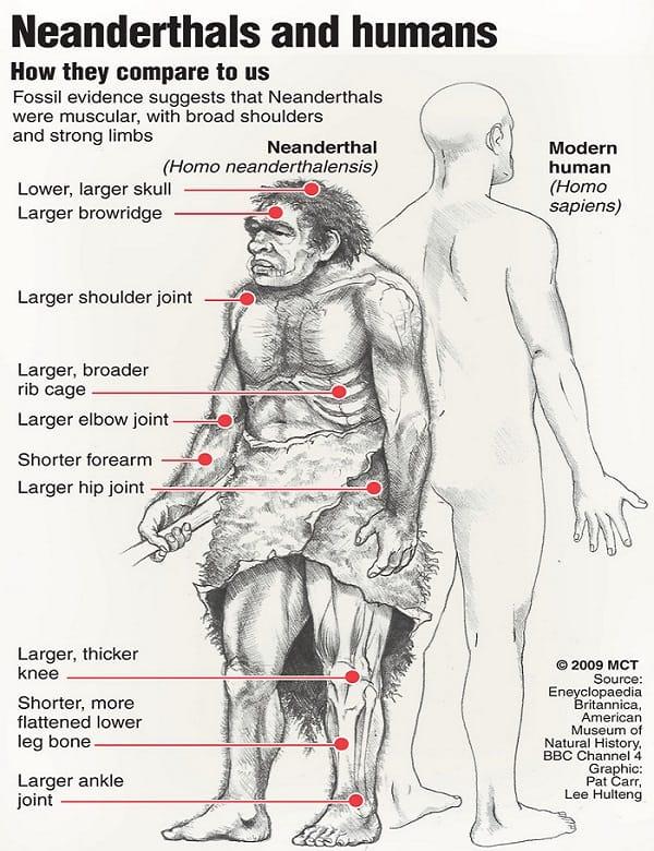 Neanderthal Vs Homosapien