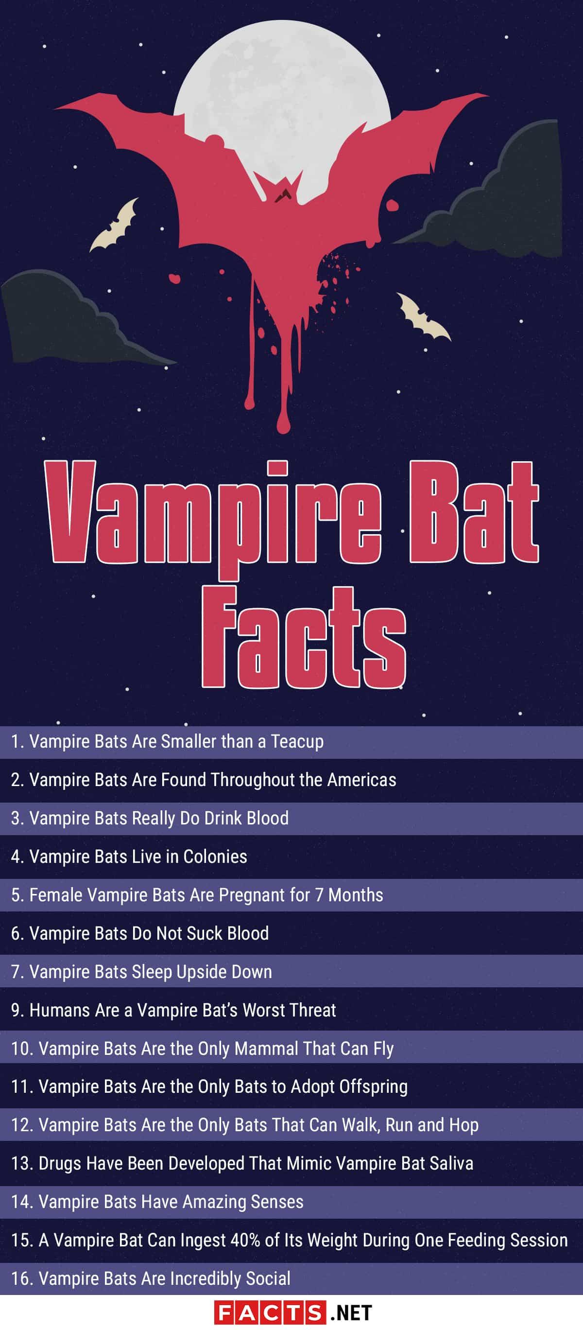 Vampire Bat facts infographics