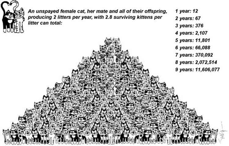 Cat Population Pyramid