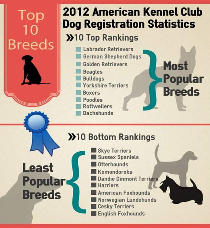 Most Popular Dog Breeds in US, 2012
