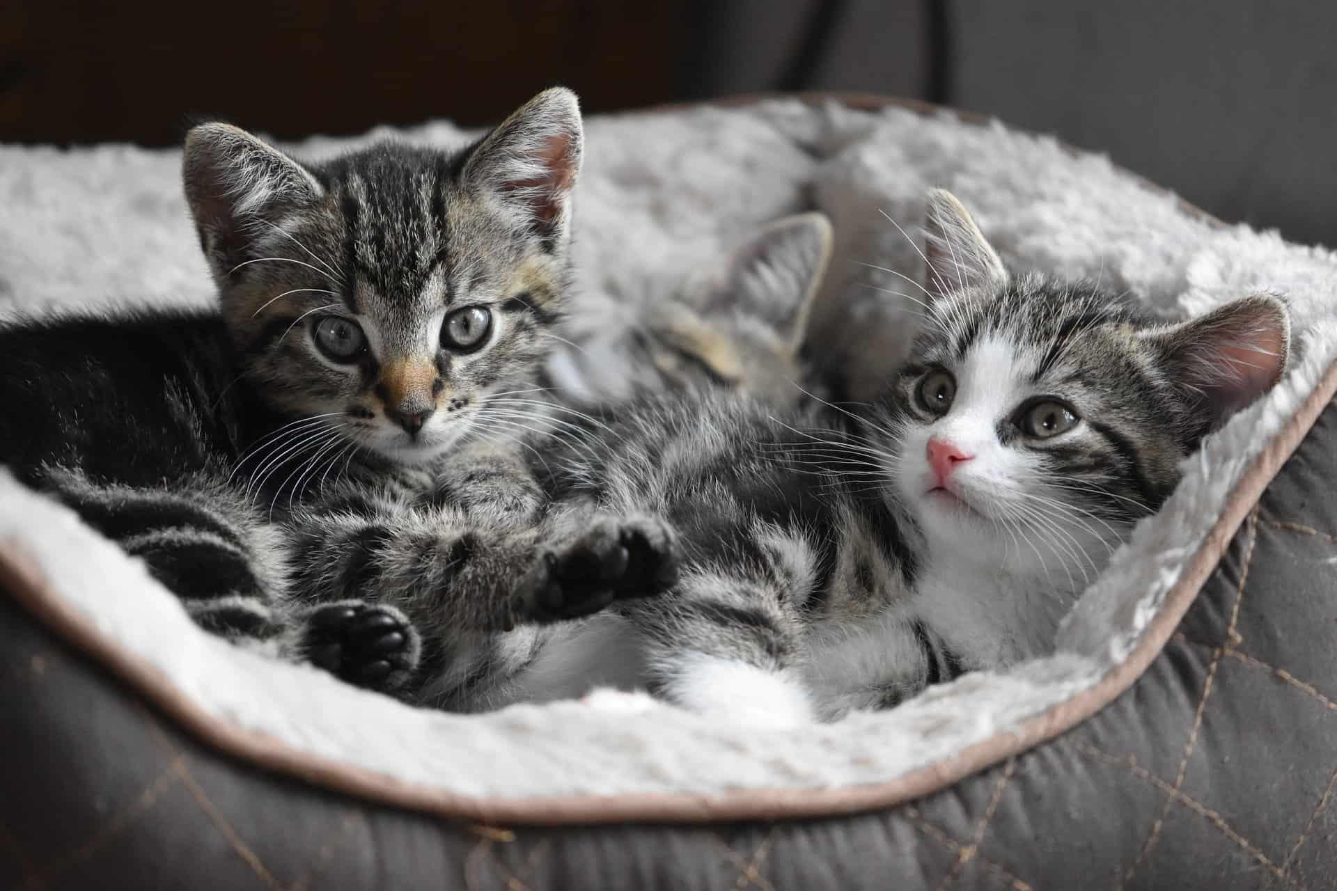 Top 20 Kitten Facts - Birth, Behavior, Development & More ...