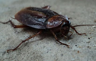 cockroach-facts