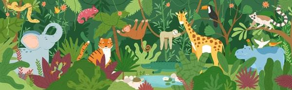 Rainforest Vector Graphics