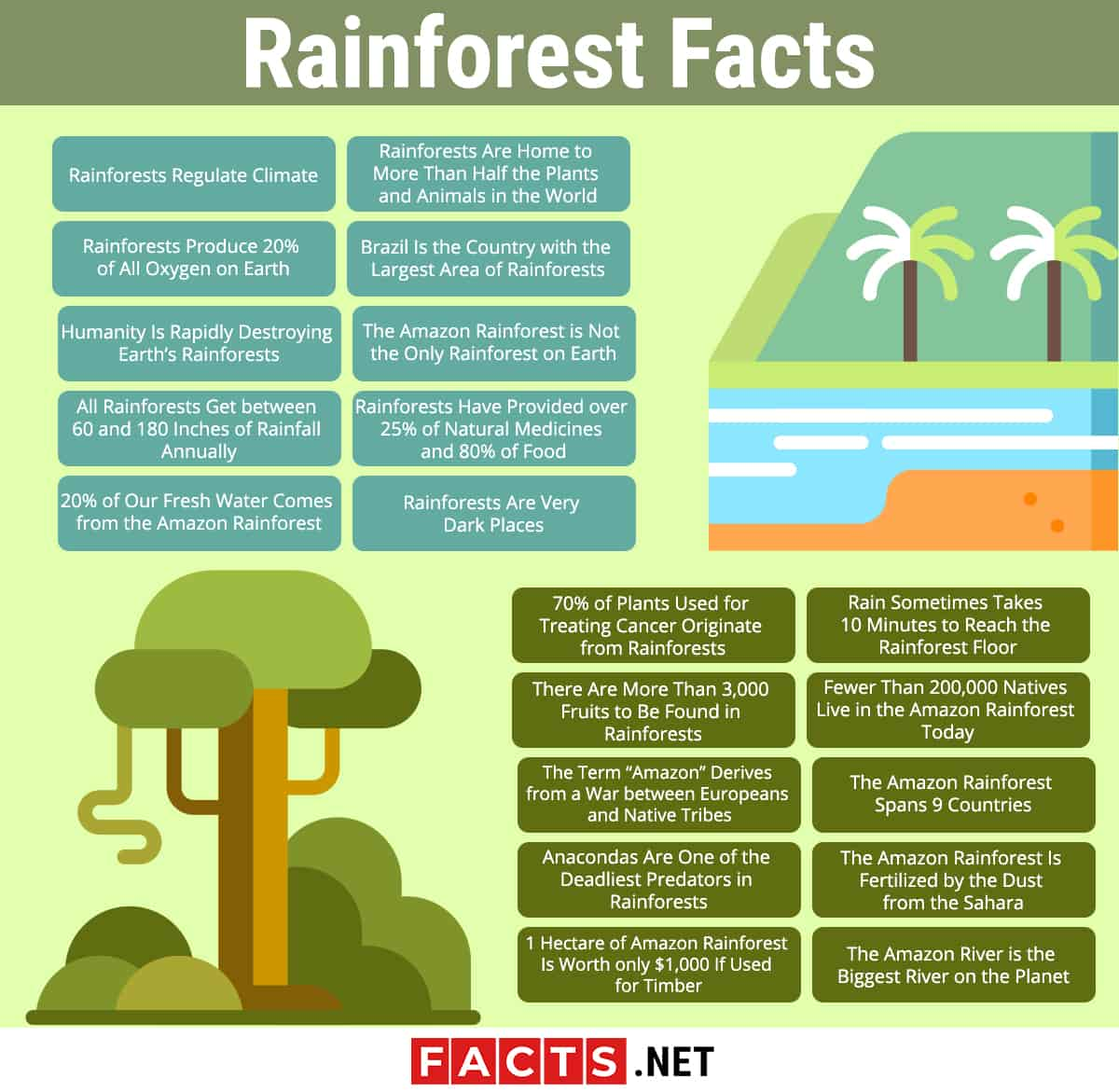 Rainforest facts infographics