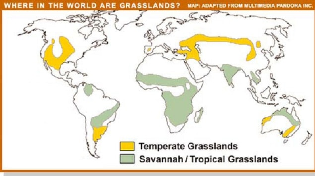 Tropical and Temperate Grassland Distribution