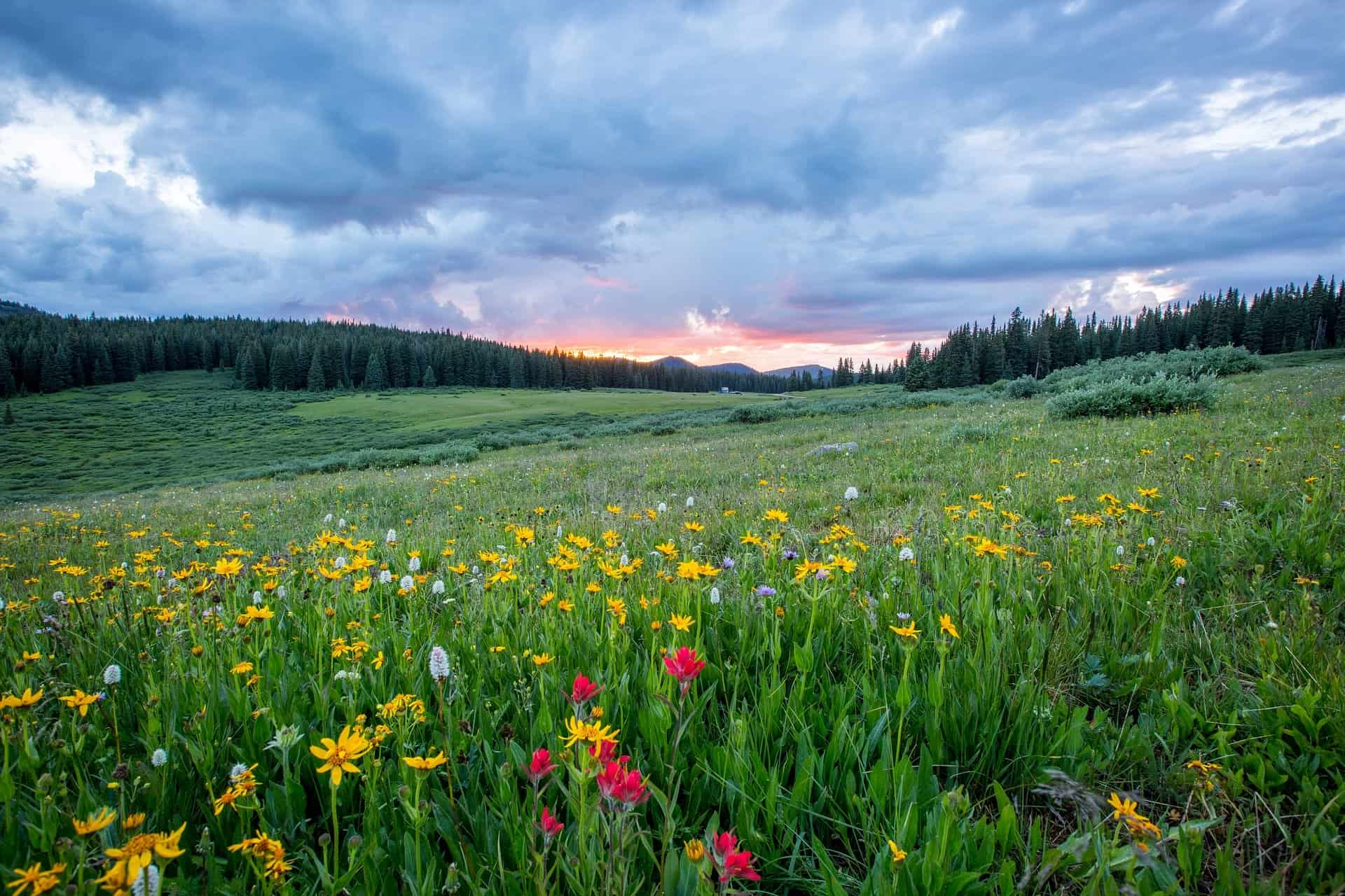 Top 16 Grassland Facts - Animals, Plants, Climate & More ...