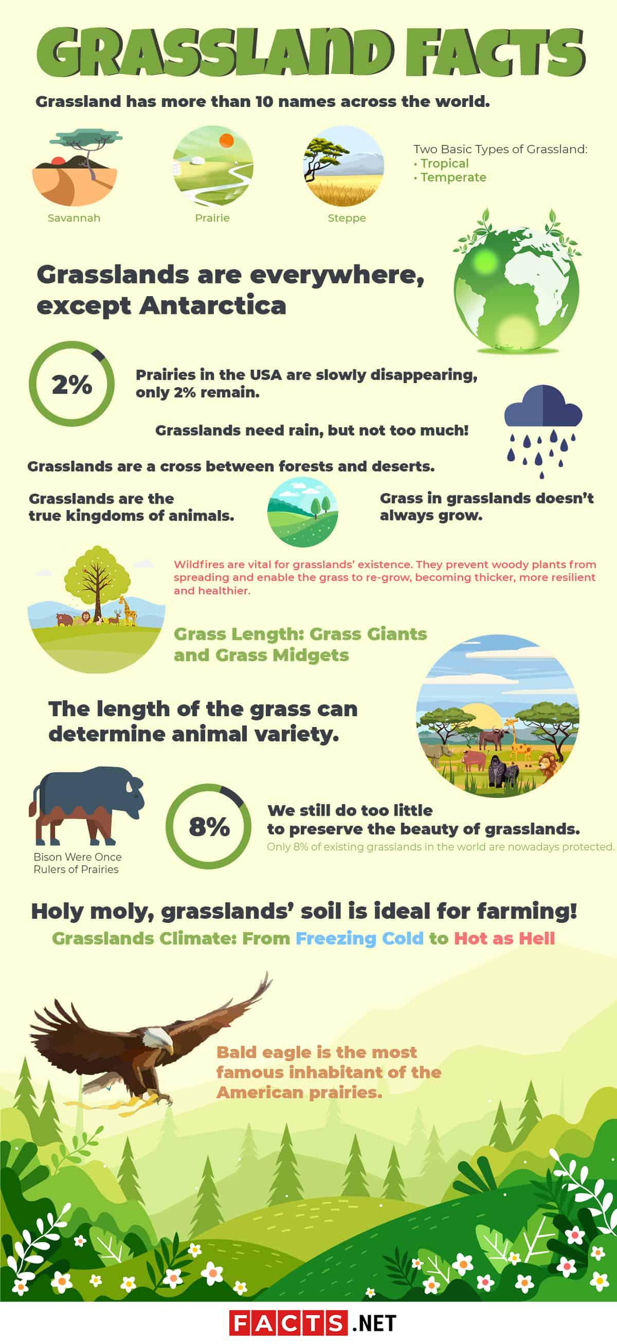 Grassland Facts Infographics