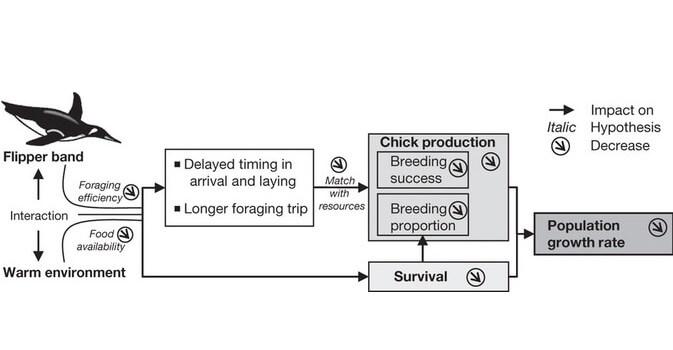 Breeding System