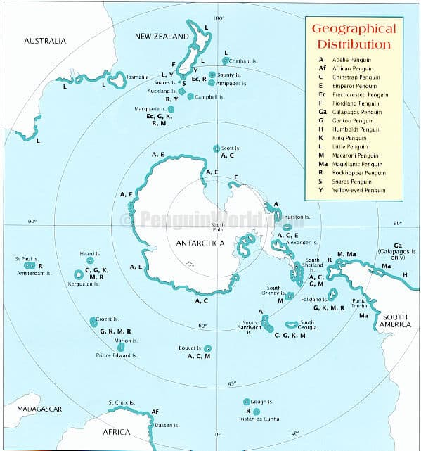 King Penguin Geographical Distribution