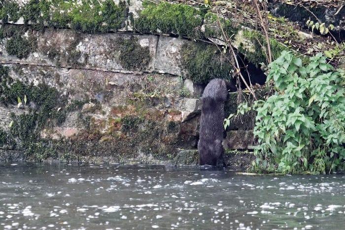 River Otter Holt