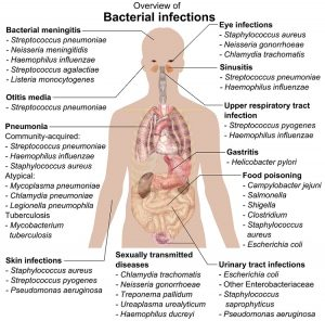 Bacterial infections and involved species