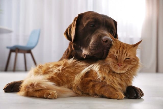 Cat and Dog Can Be Friends