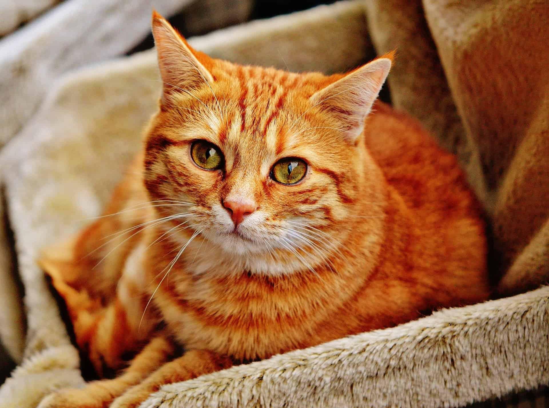 cat-facts