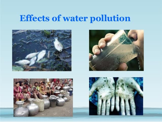 the negative effects of pollution of our land and water from animal waste