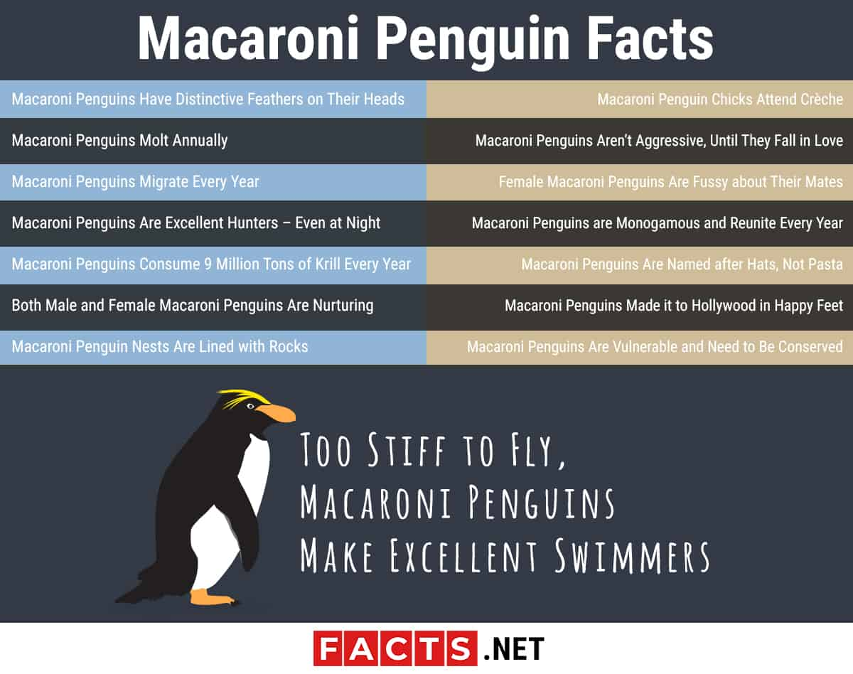 Macaroni Penguin Facts Infographics