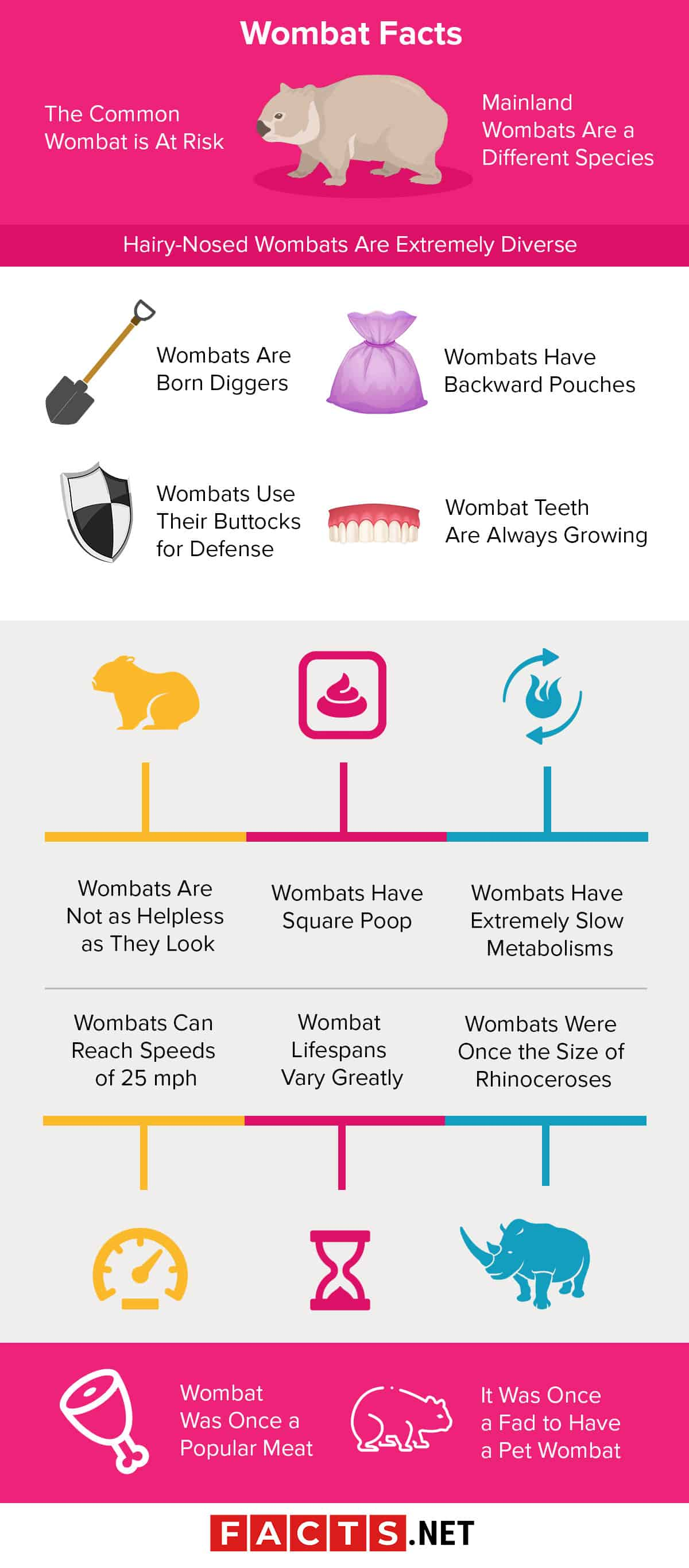 Wombat Facts Infographics