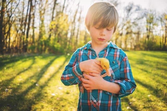 Boy Holding a Duckling