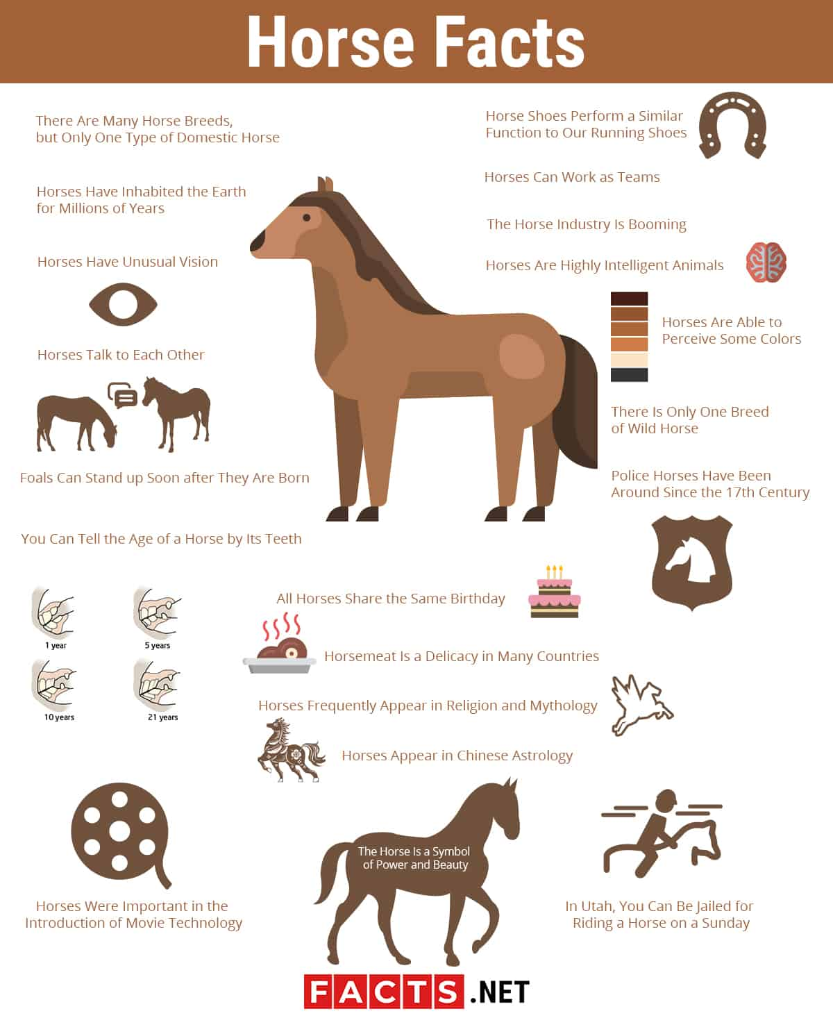 Horse Facts infographics