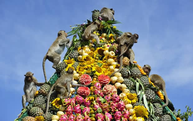 Monkey Buffet Festival food pyramid