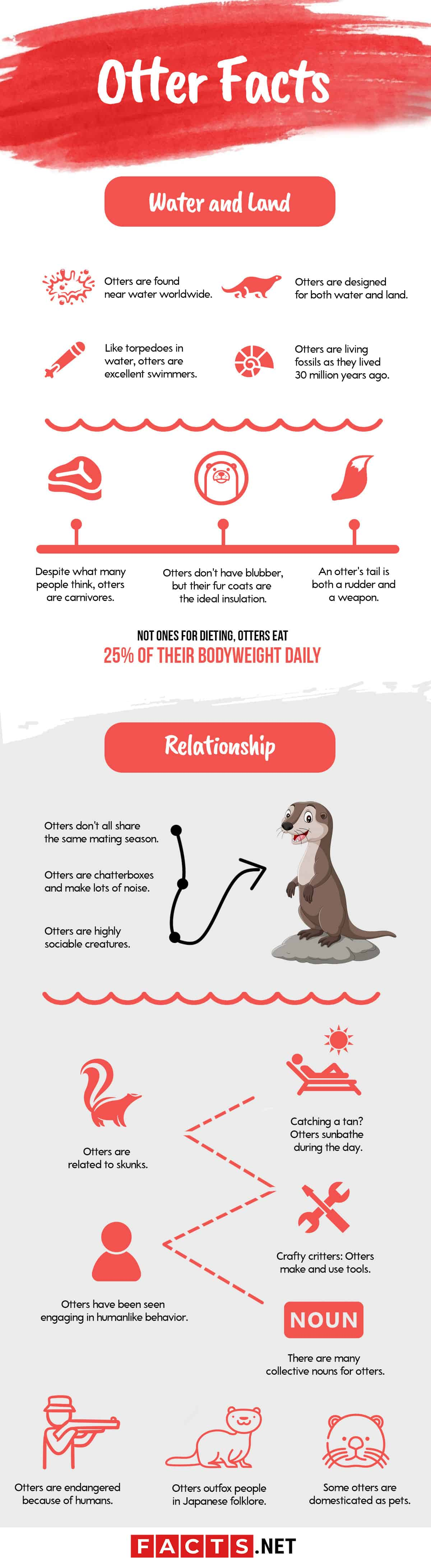otter facts infographics