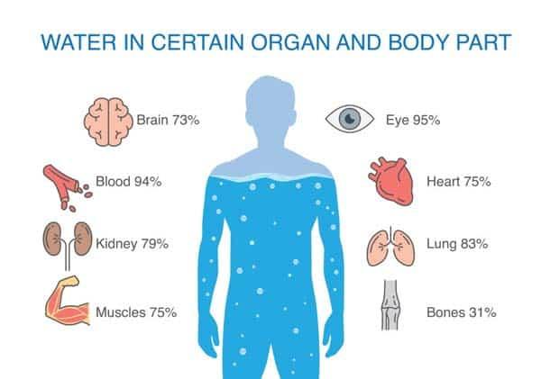 Body Water Percentage