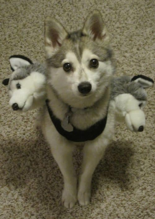 Cerberus-Dog-Costume