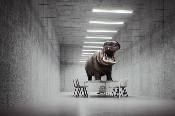 Angry Hippopotamus